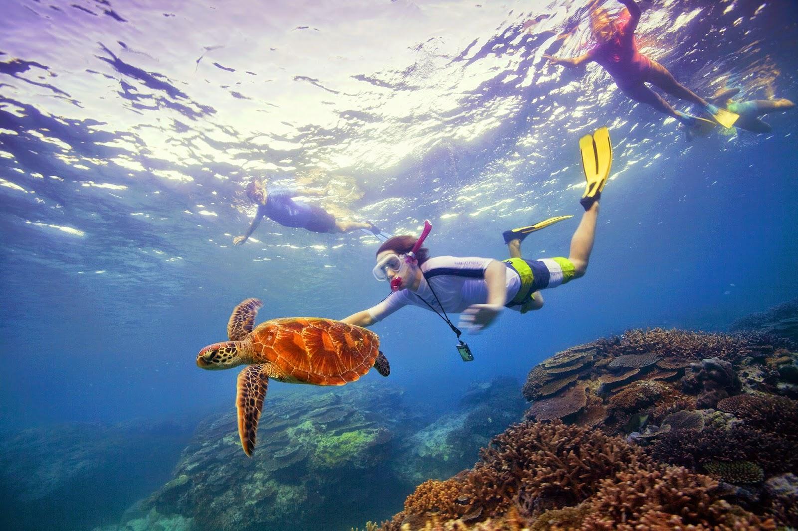 vacances de la côte d'or en Australie, l'aventure en Australie, les koalas étreindre, kangourous, snorkeling dans la Great Barrier Reef, plongée, Warner Bros Movie World, Sea World, Dreamworld