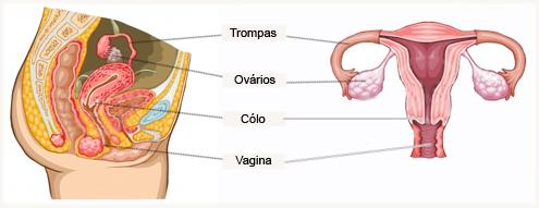Exame de secrecao varginal na gravidez