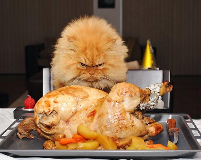 garfi el gato mas enojado del mundo