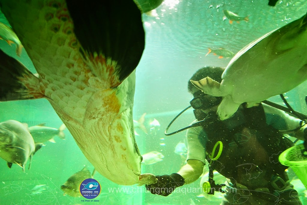 Thailand around the city: Chiangmai Zoo Aquarium