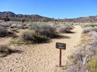 Black Rock Canyon Trail junction, Joshua Tree National Park