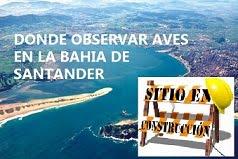 DONDE OBSERVAR AVES EN LA BAHIA DE SANTANDER