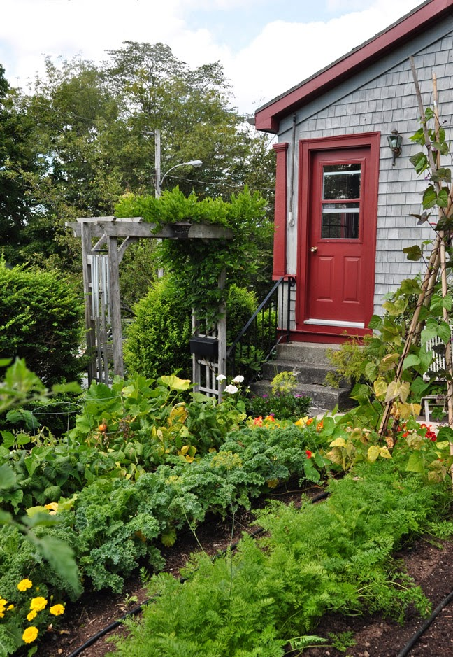 Three dogs in a garden a few ideas for small vegetable for Small private garden ideas