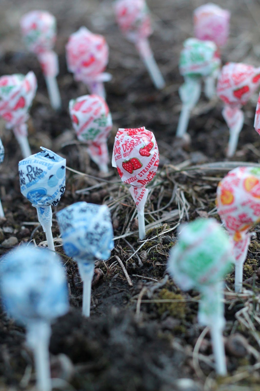 Our Lollipop Forest Welcometothemousehouse Com