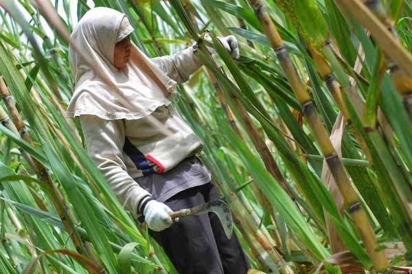 Indonesia Potensial Jadi Eksportir Terbesar Bahan Bakar Nabati Dunia