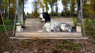 Fondo Perro en el parque