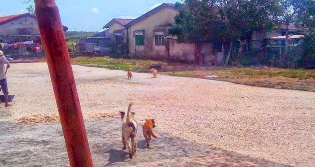 Meloyakan.. Kilang Belacan Jijik Dipenuhi Anjing
