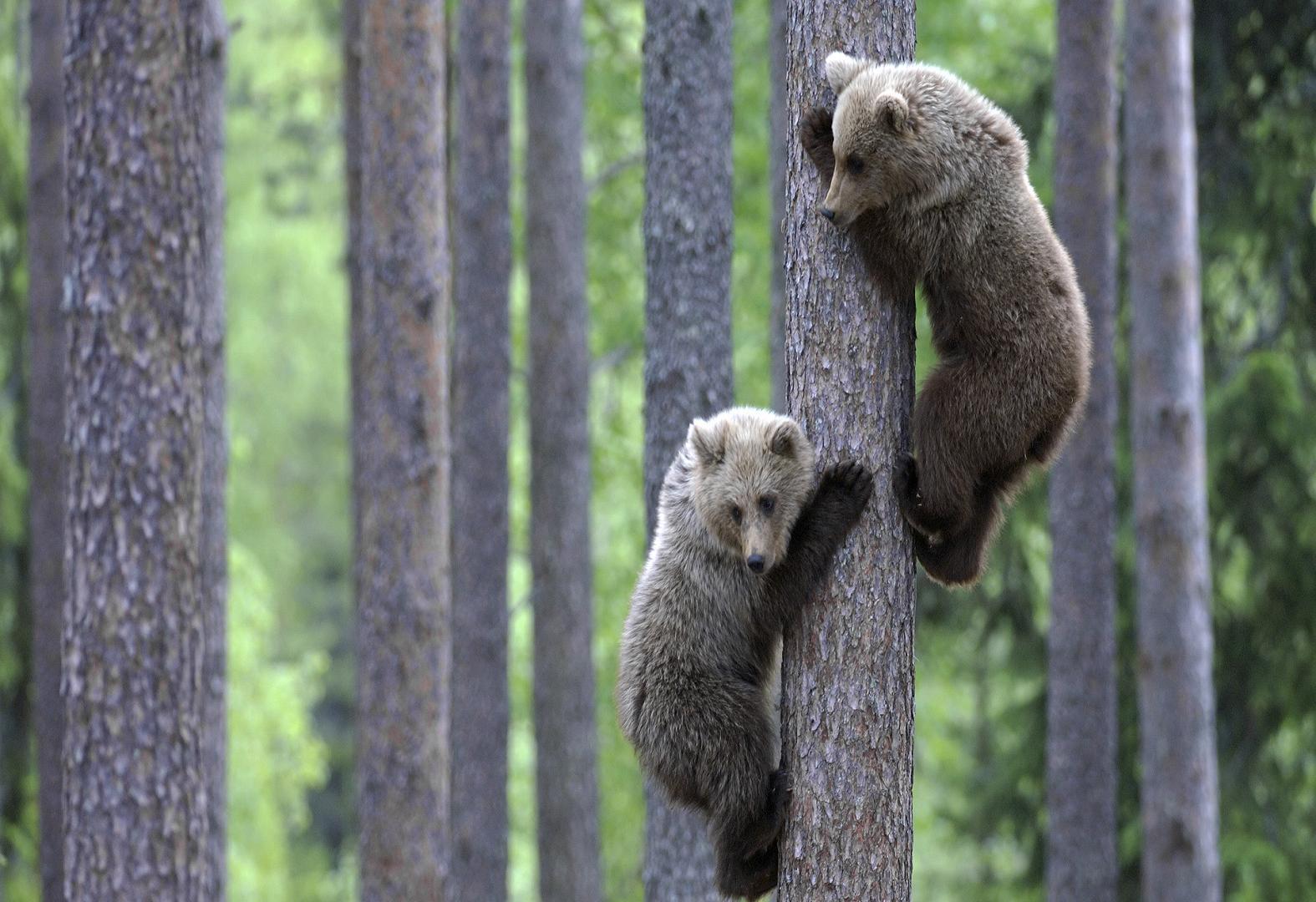 1001Places: Amazing Animals
