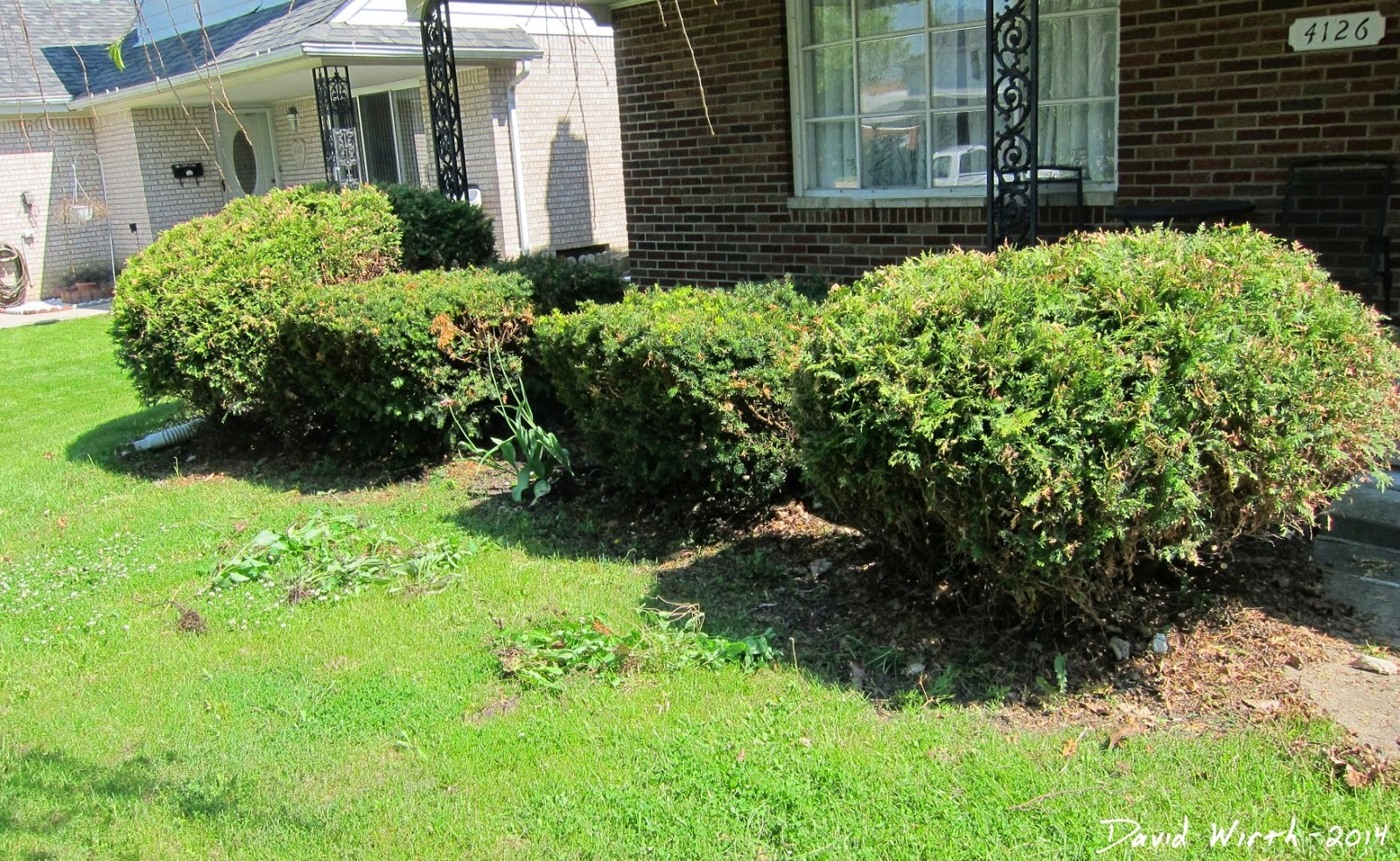 how to improve a front yard, edging, mulch