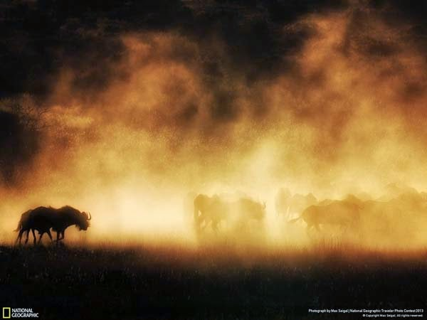 7.) Wildebeest running from wildfire - 12 Photos That Prove Nature is Awesome