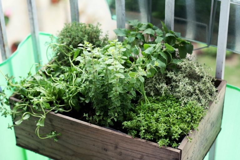 Very Best Balcony Herb Garden 768 x 513 · 285 kB · jpeg