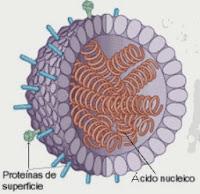 Organismos virales