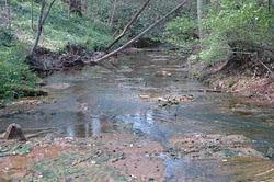 6. Dean's Woods - SpringCreek