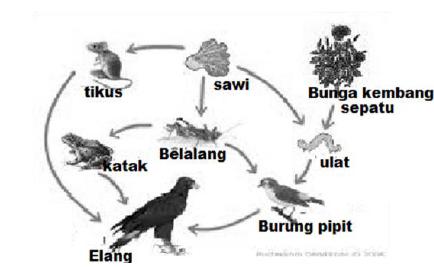Prediksi Soal Ujian Nasional Biologi SMA Tahun 2014 ...
