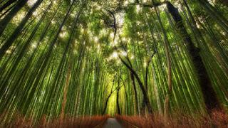 Venta de astillas de pino