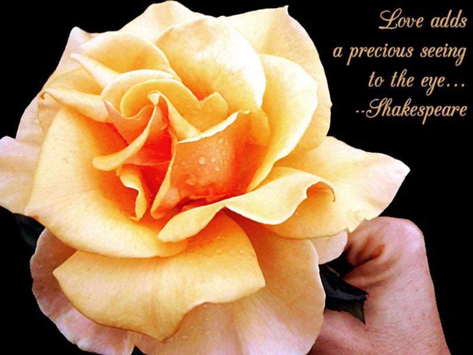 http://2.bp.blogspot.com/-lypbmL1UN-A/T6P6Hzt-hqI/AAAAAAAACXw/41gwnfgjaKc/s1600/Love+Quotes+2.jpg
