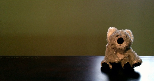 toy photography, koala stuffed toy