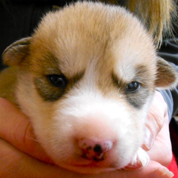 The Puppies Eyes Are Opening Sp Kennel