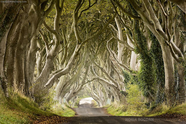 2. The Dark Hedges by Horia Bogdan