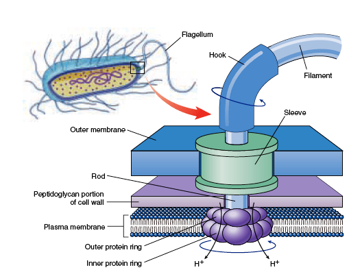 Vptac Pharma  Microbiology  U0026 Biotechnology Mcq  With
