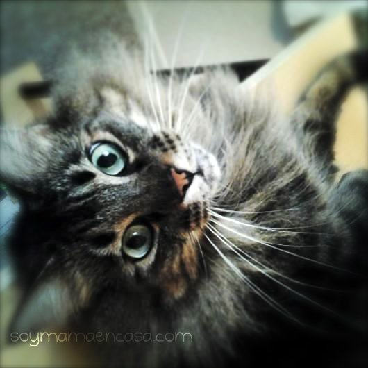 foto de gato cat