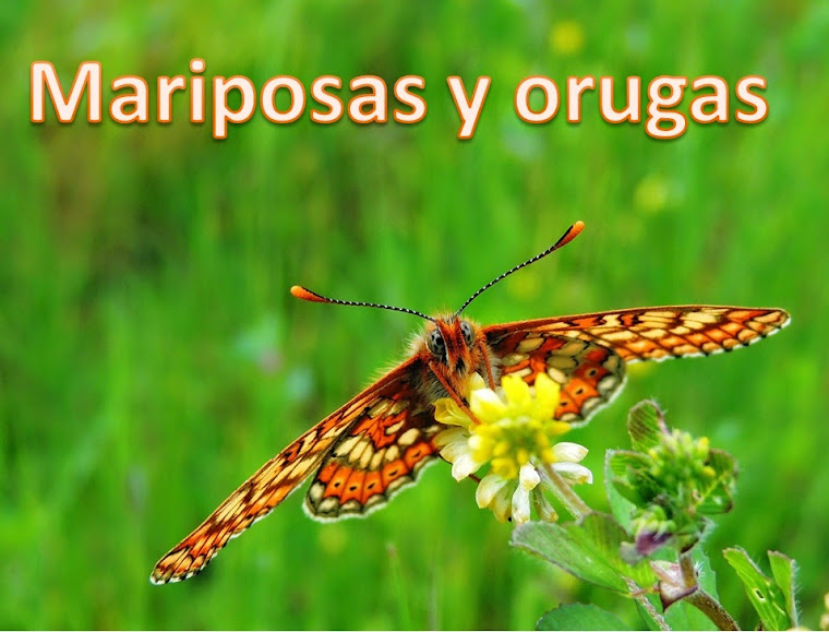 Mariposas y orugas (Volvoretas e eirugas)