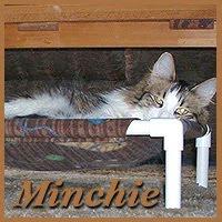 Minchie