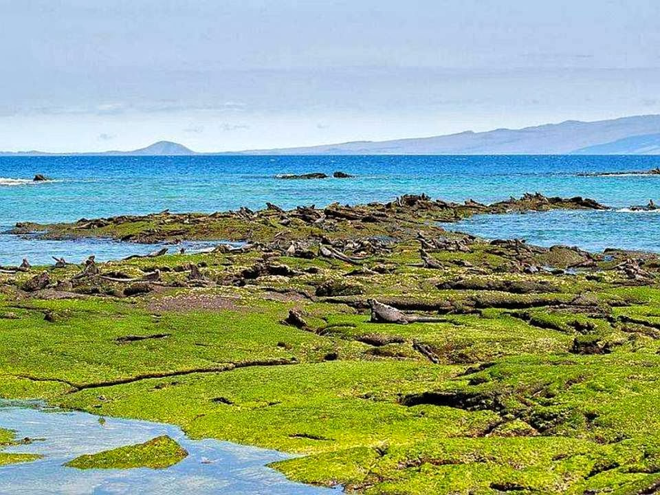 http://www.funmag.org/pictures-mag/around-the-world/galapagos-island-45-photos/