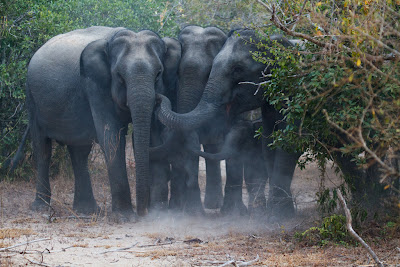 A herd of Elephants huddling around two calves