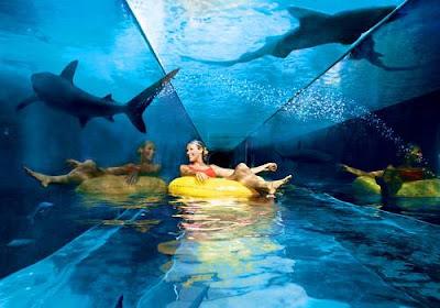 http://2.bp.blogspot.com/-m-_XAhWRxH4/T4pK8CnOucI/AAAAAAAAbPM/0qc91g-RbzQ/s1600/atlantis-hotel-in-dubai-shark-tank.jpg