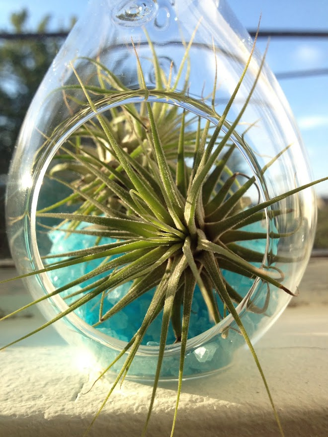 Obsessed with airplants.