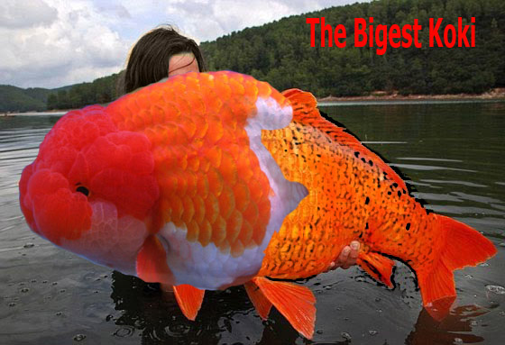 Galleries of knowledge and education tips and tricks in for What are fatty fish