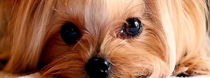 Imagenes de perritos tiernos para descargar   Imagenes chistosas y ...