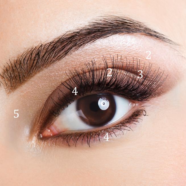 how to put simple eyeshadow step by step