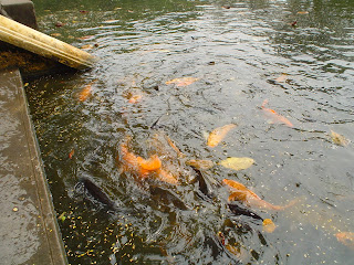 Fish pond next to the house of Ho Chi Minh in Hanoi