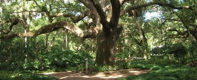 St Augustine Events This Weekend 3  Washington%2BOaks%2BState%2BPark St. Francis Inn St. Augustine Bed and Breakfast