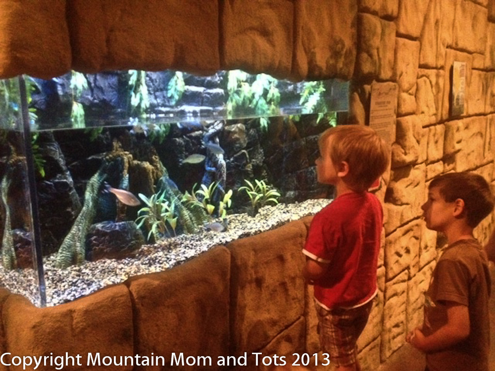 The Living Planet Aquarium Sandy Utah Mountain Mom And