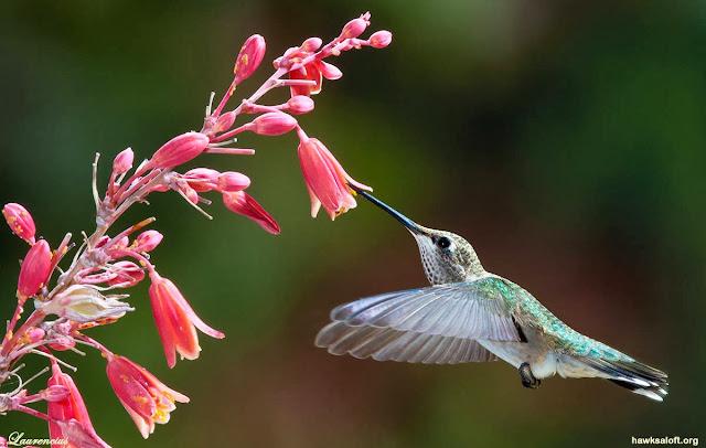 Algoritma-Hummingbird-Google