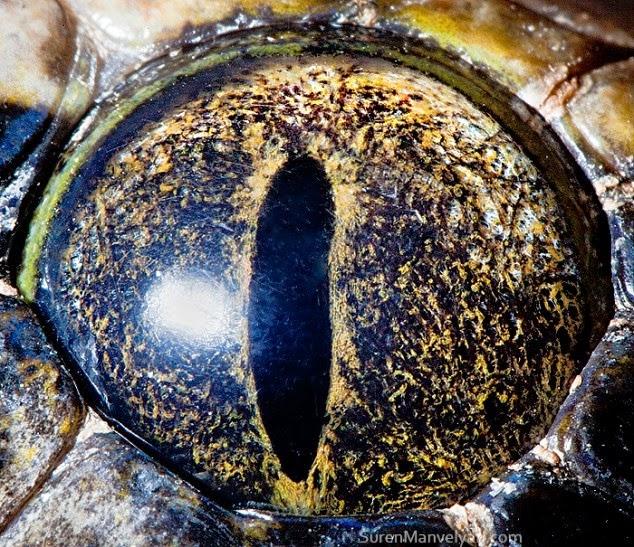 ojo de piton