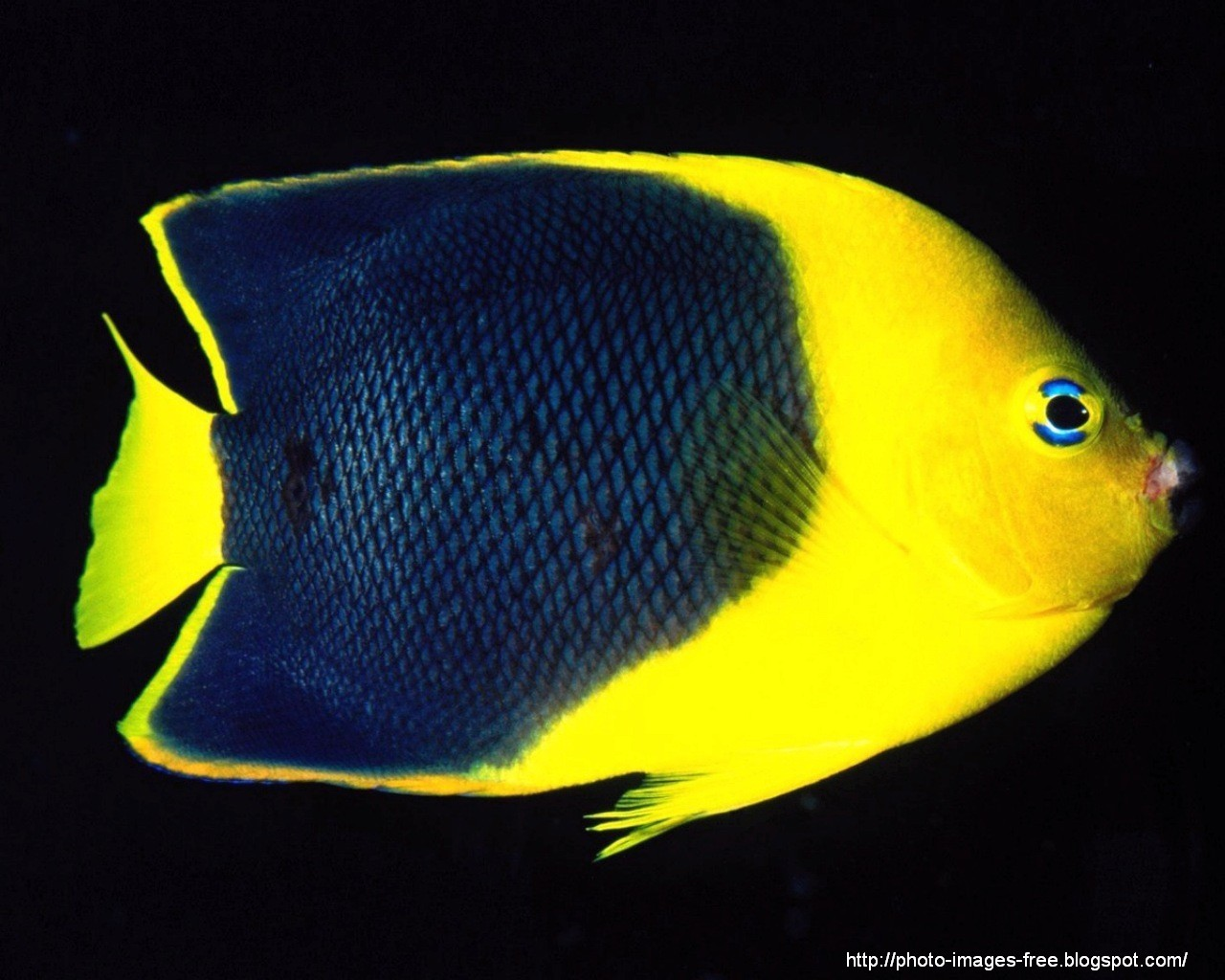 Photos gallery pictures photos fish beautiful life for Fish under the sea