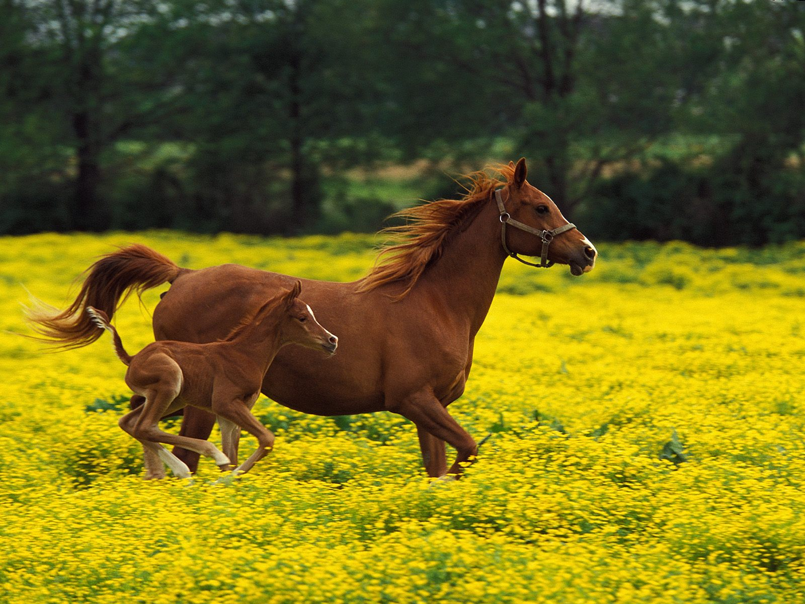 the wallpaper backgrounds free horse wallpaper