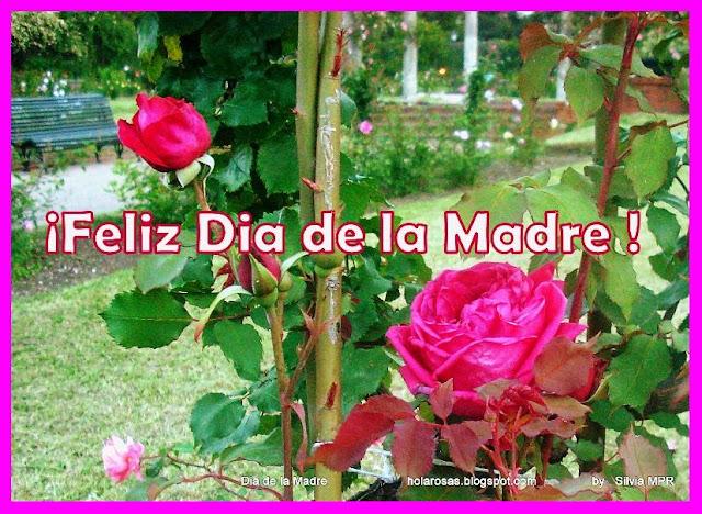 rosas rojas para el dia de la madre obsequios virtuales postales y tarjetas gratis.jpg