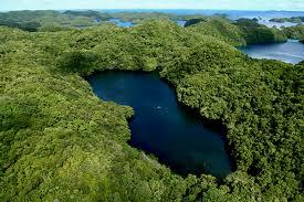 Jezera - Page 2 Jellyfish+Lake%252C+Palau+15