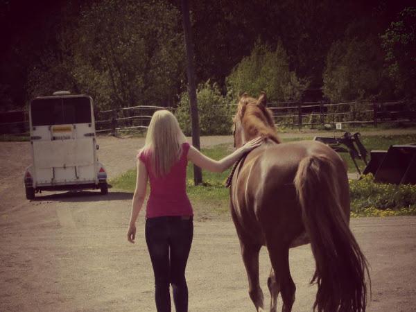 Kuvahaaste: Mitä hevosen omistaminen on?