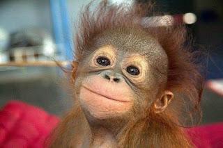 загадки о обезьяне для детей