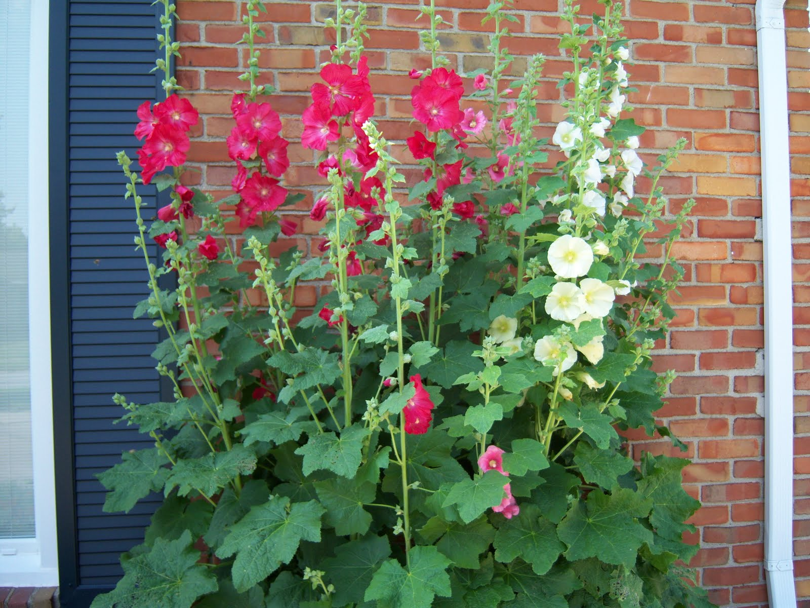 K S Quilting Korner Hollyhock Flowers
