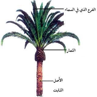 العودة التربية القرآنية خطاب القرآن yrt.jpg