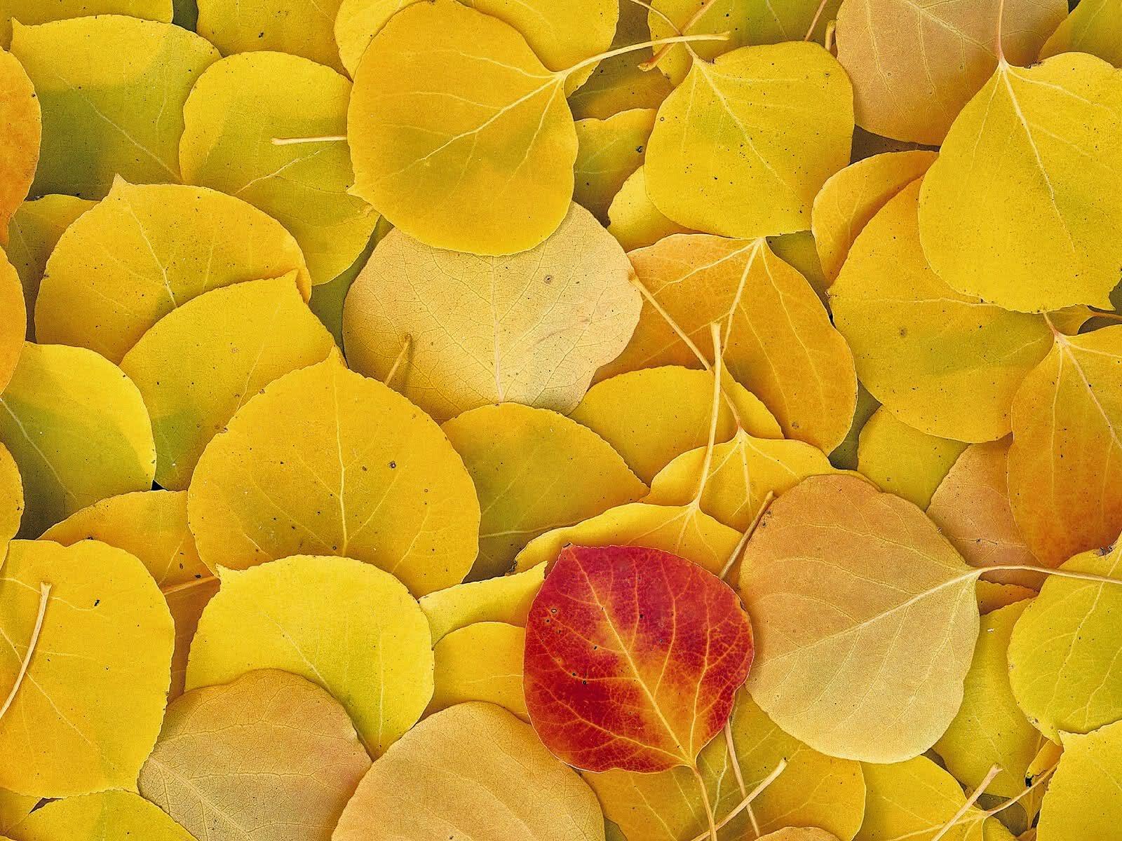 best fall autumn wallpaper yellow leaves