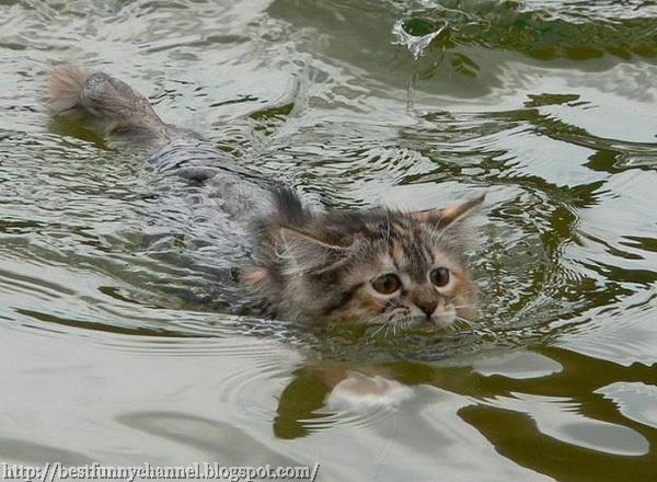 Kitten Swimmer.