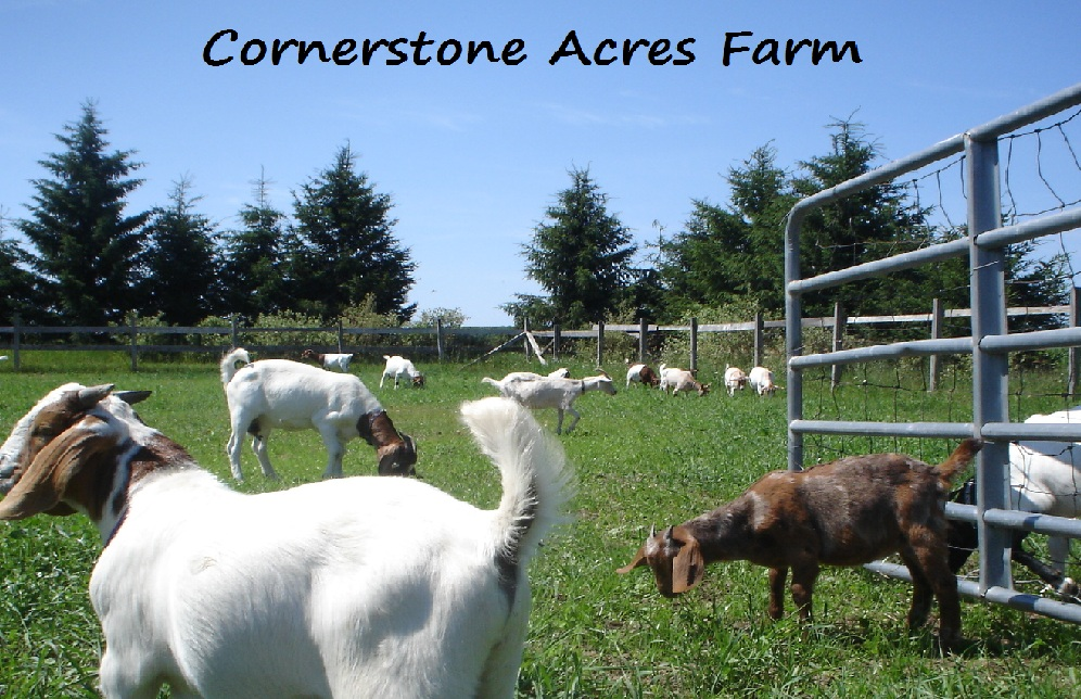 Cornerstone Acres Farm
